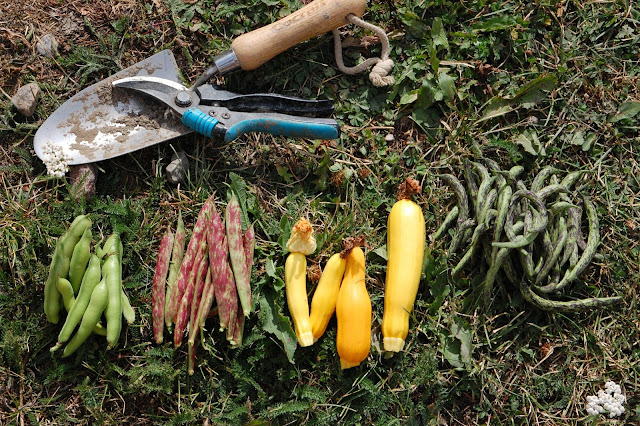 beans and squash lie on the grass with garden tools
