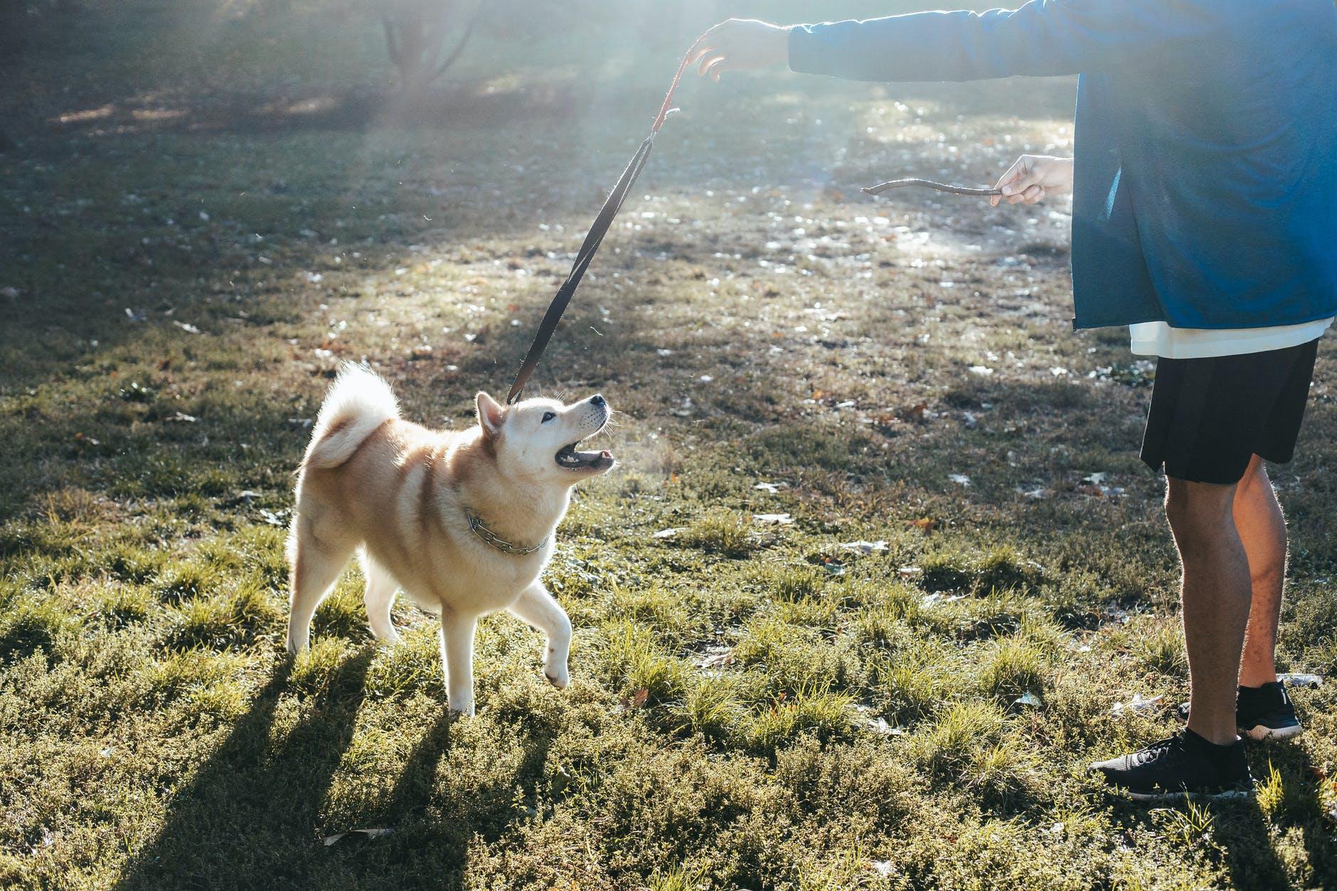 Comment faire de l'exercice avec mon chien