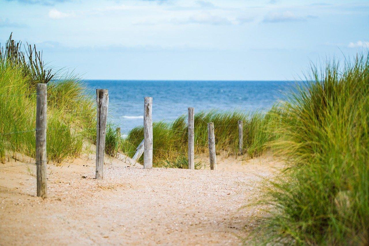 praia bucolica e ensolarada com mata rasteira e agua do mar azulado