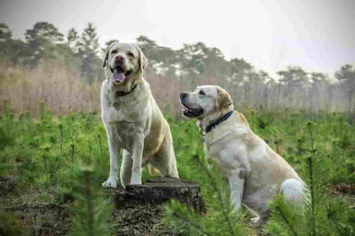 Mexican Dog Breeds, Mexican Dogs