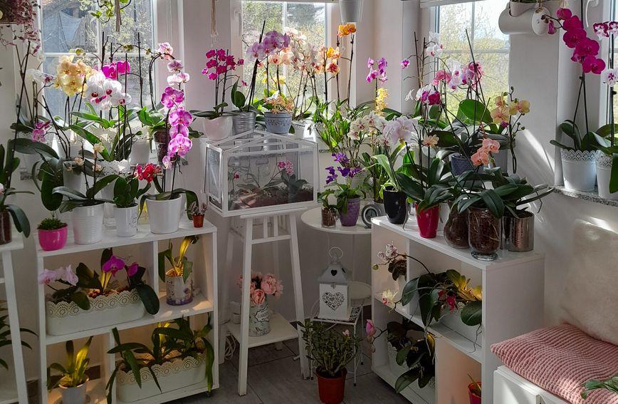 orhideja_cvijeće_uredi-dom