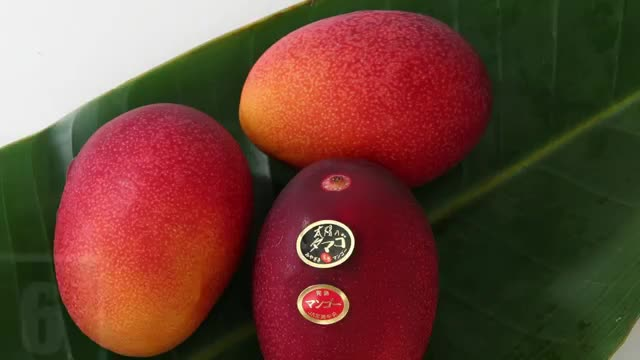 12 MOST EXPENSIVE FRUITS IN THE WORLD Taiyo no Tamago Mangoes