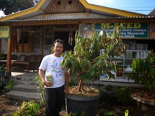 kebun durian pohon durian buah durian, khasiat durian durian berasal dari, durian montong.nama latin durian durian bawor kebun durian