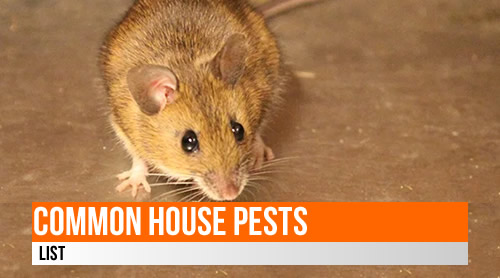 LIST: 40+ Common Household pests worldwide