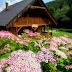 Du lịch Châu Âu mùa hoa nở rộ khắp nơi