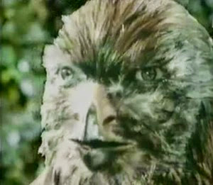 lacn-manimal-aigle