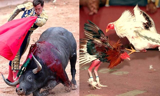 Las corridas de toros y peleas de gallos seguirán vigentes en el Perú