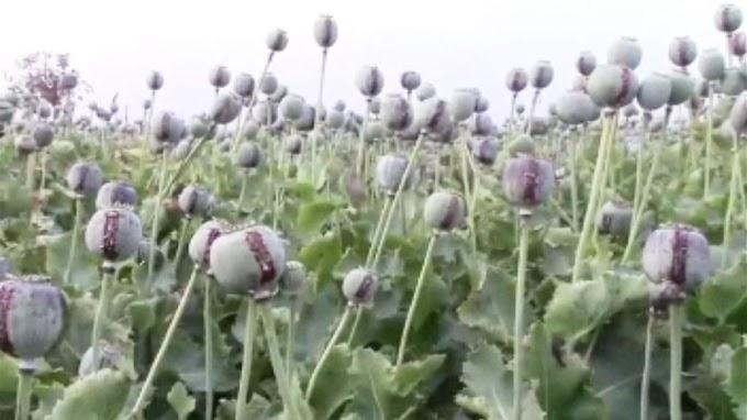 नई अफीम नीति से नाराज किसान कई जगहों पर देंगे धरना प्रदर्शन मुख्यमंत्री को सौंपेंगे ज्ञापन