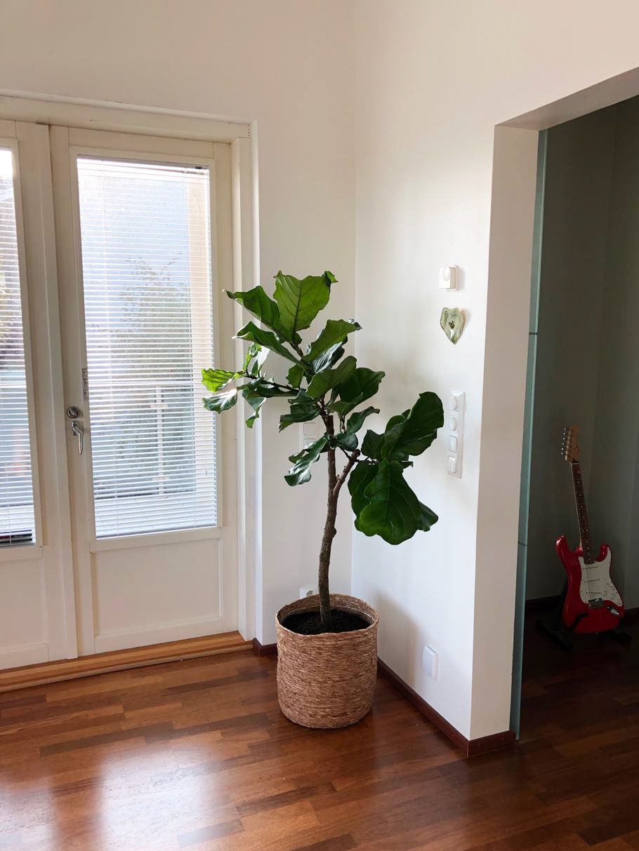 träd växt inomhus