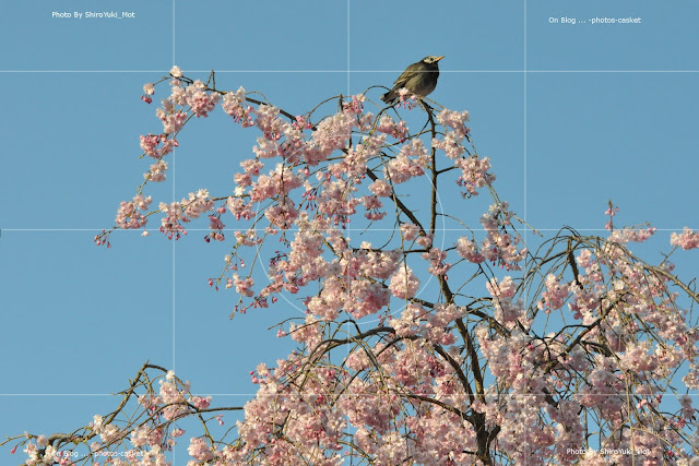 花 衆生 桜 椋鳥 A Nightingale Sang In Berkeley Square Anita O'Day