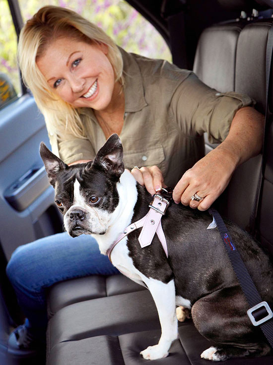 11 Tips For Taking a Road Trip with Your Dog