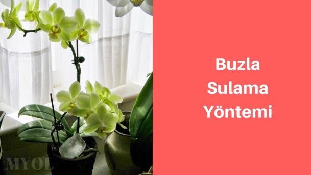 buzla orkide sulama