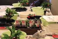 Cafeでのワークショップの教材、山野草の花苗の入ったカゴ