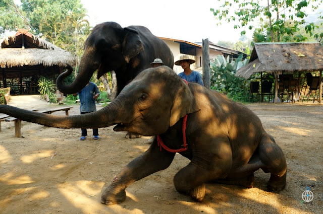 słonie tajlandia