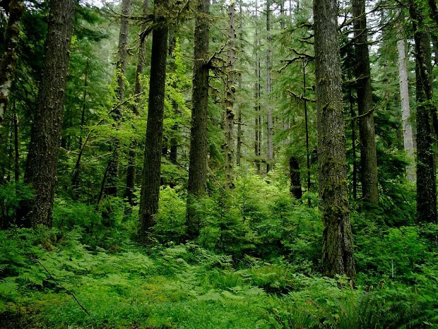 WORLD RAINFOREST DAY 2020 (22 June) | Today Special Day.