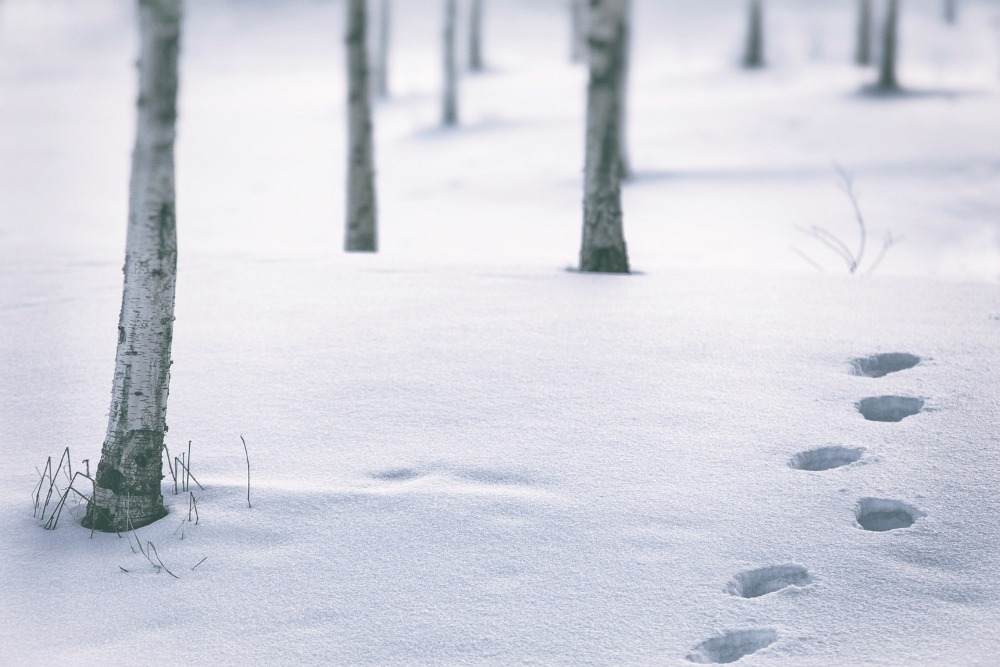 talvi, winter, espoo, visitespoo, Visualaddict, valokuvaaja, Frida Steiner, luontokuva, nature, valokuvaus, outdoors, scandinavia, nordic, finland, visitfinland,, lumi, snow, scenery