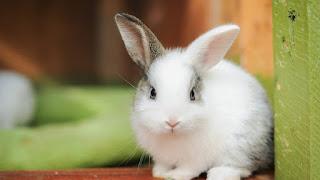 Tener un conejo como mascota