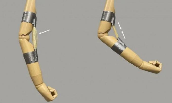 'Cơ bắp' polymer có thể nâng vật nặng gấp 5.000 lần