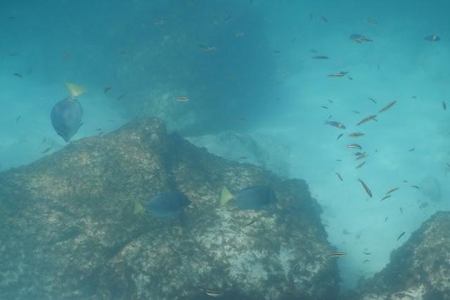 Gardner Bay fish