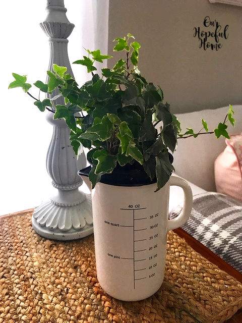 English ivy plant farmhouse measuring pitcher