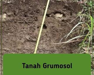 gambar tanah grumosol