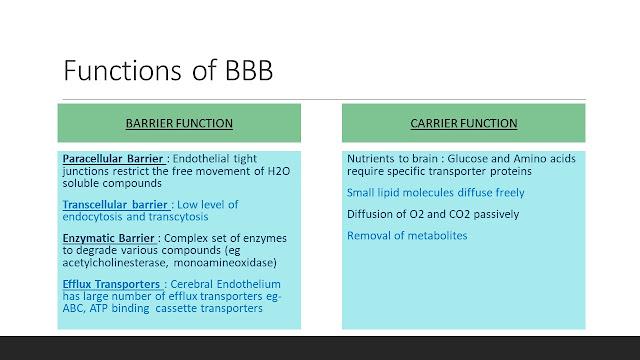 Function of Blood Brain Barrier