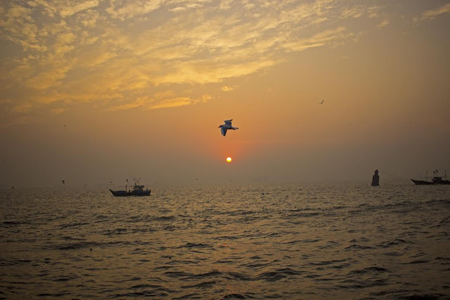 skywatch, dawn, sunrise, bird, arabian sea, fishing boats, sassoon docks, mumbai, incredible india