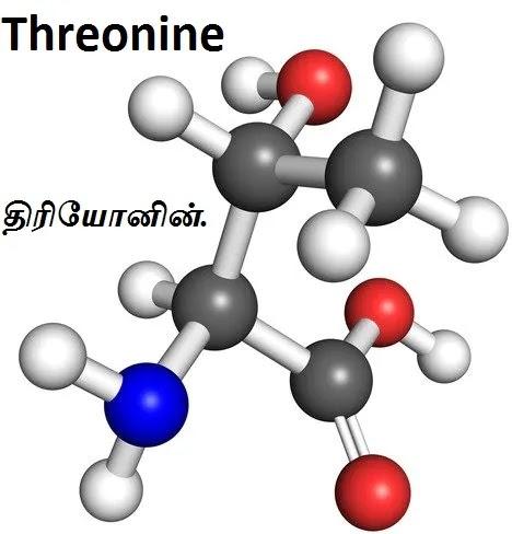 அமினோ அமிலங்கள் - Amino Acids - Part 2.