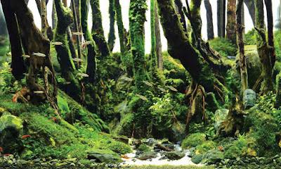 Aquascape tema hutan