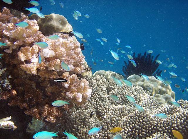 Exploring Underwater Raja Ampat