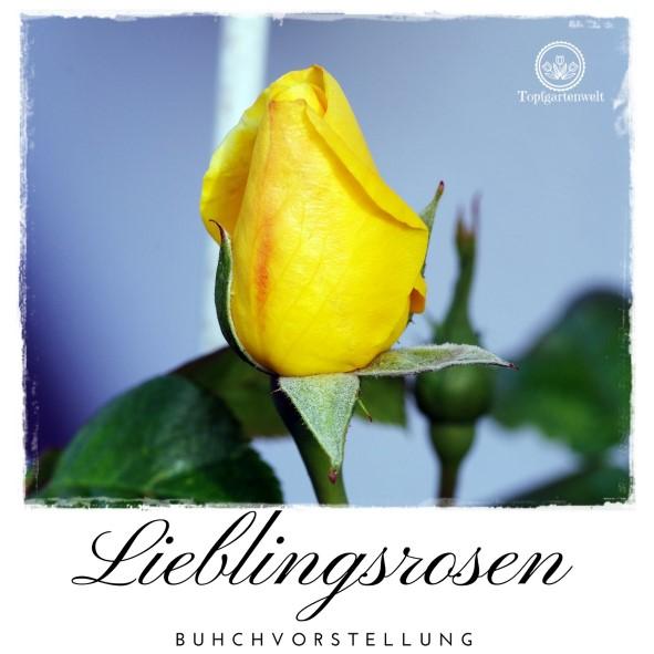Buchvorstellung: Lieblingsrosen, finden und verlieben - die besten Rosen für den Garten im Portrait - Rose Arthur Bell vor dem Aufblühen - Gartenblog Topfgartenwelt