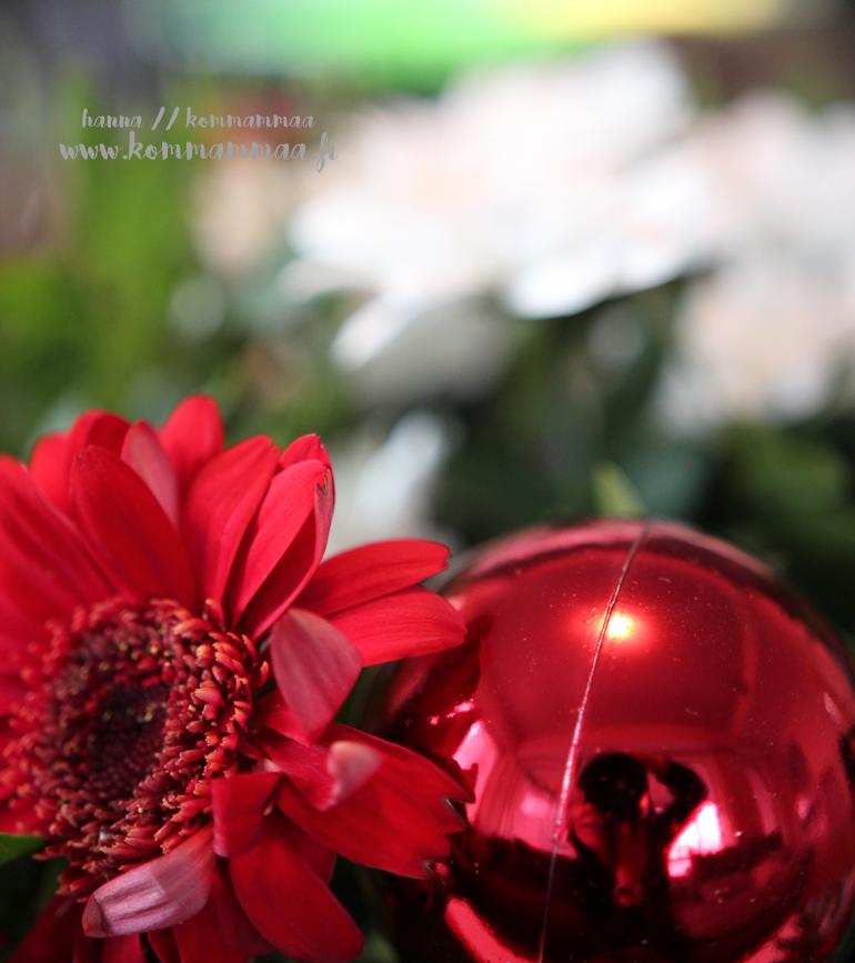 joulu joulukuu 2017 jouluaatto jouluasetelma kukka
