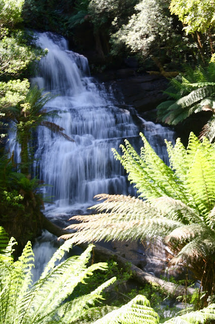 waterfall and tree ferns