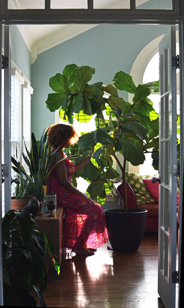 How I Care for My Fiddle Leaf Fig(Ficus Lyrata)- design addict mom
