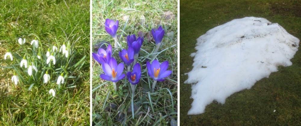 Garten Anfang März
