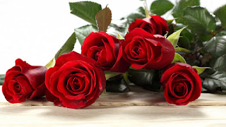 rose day images for friends