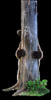Urso na árvore em png
