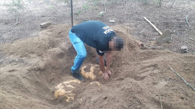 Polícia encontra e apreende 100 kg de maconha enterrados em terreno da zona rural de Ipirá