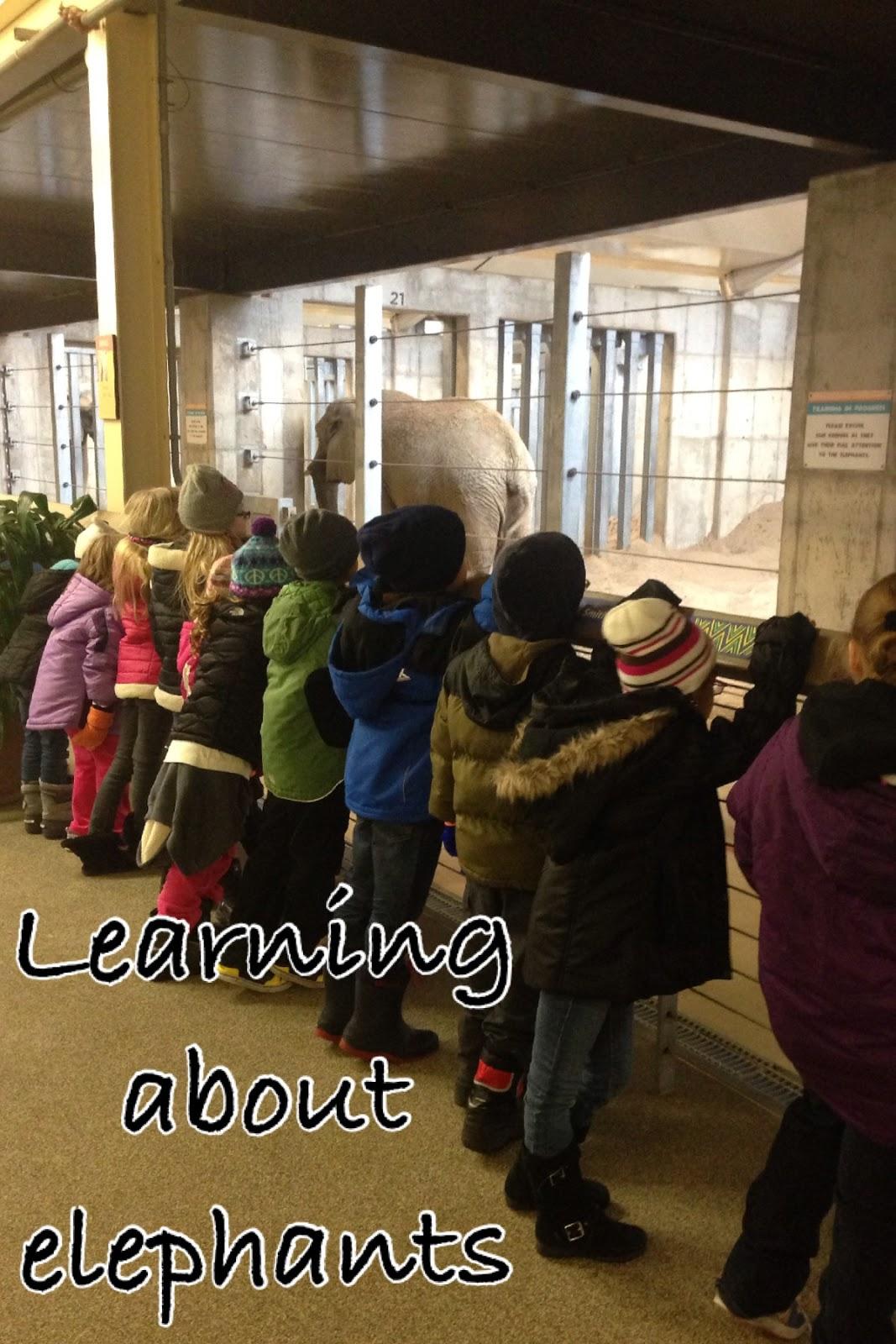 Mrs Brinkman S Blog Zoo Field Trip