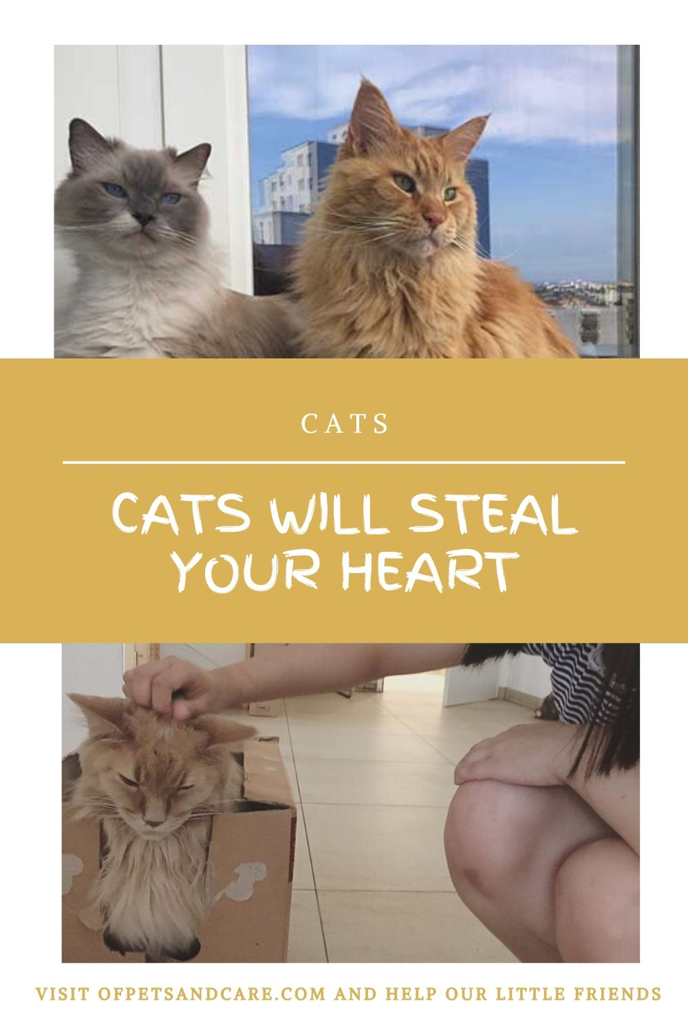 Cats Will Steal Your Heart,