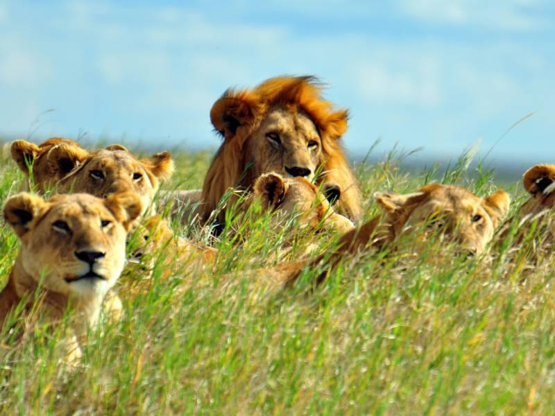 Serengeti National Park 6