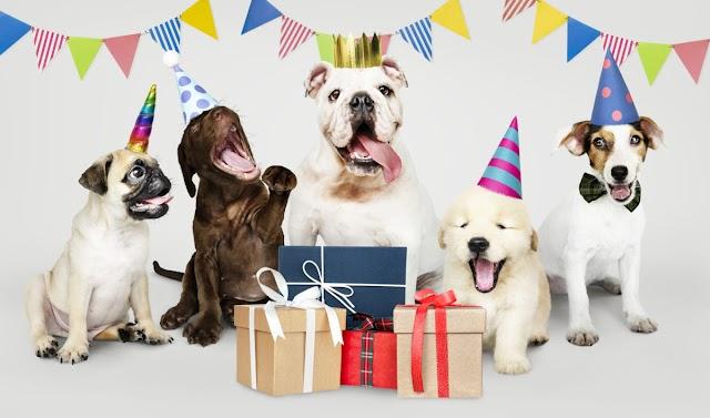 Como realmente determinar a idade do seu cachorro em anos humanos