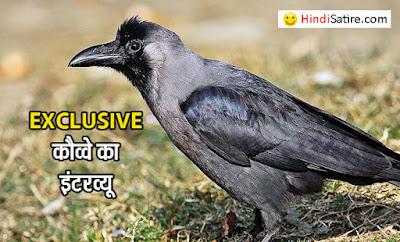 कौवा , crow