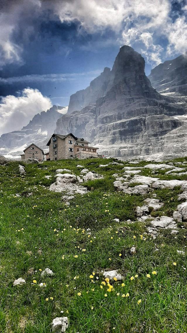 dove nascono le stelle alpine