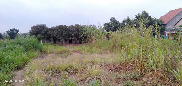 Jual Murah Tanah Kavling Jegu Lodoyo