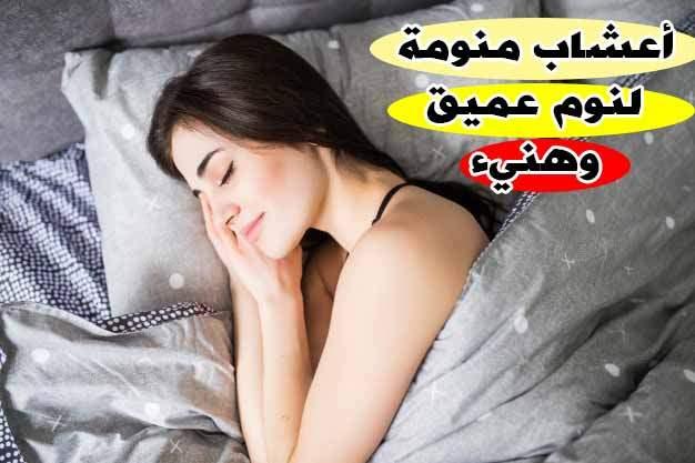 اعشاب تساعد على النوم, اعشاب للنوم السريع, اعشاب تساعد على النوم ليلا, عشبة تساعد على النوم