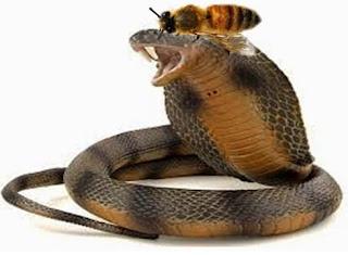 La Vespa e il Serpente (Esopo)