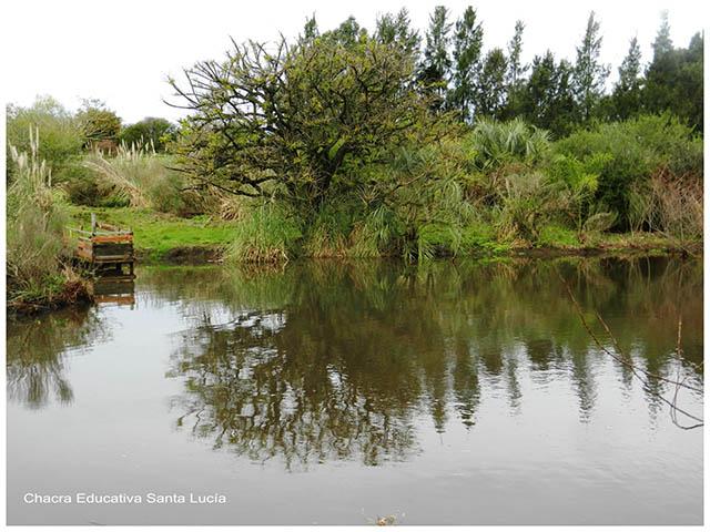 Reproducción en plantas terrestres y acuáticas- Chacra Educativa Santa Lucía