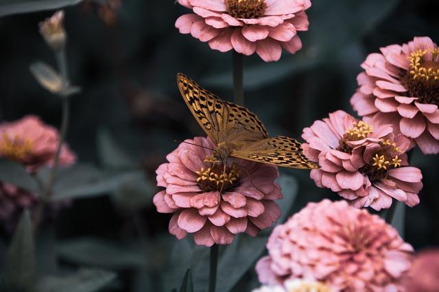 Gambar kupu kupu cantik untuk wallpaper