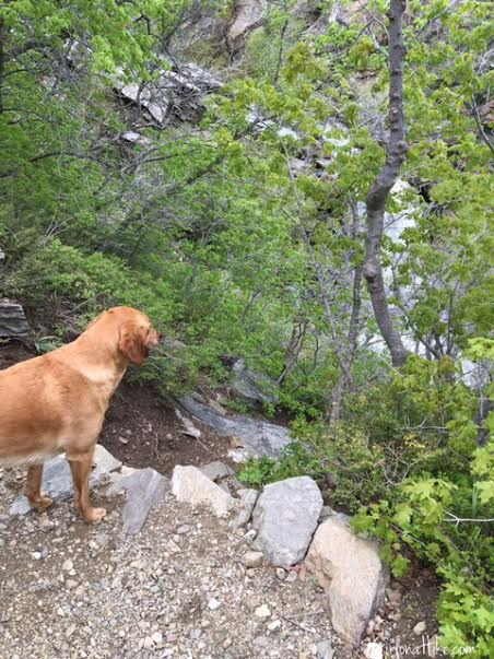 Farmington Canyon Trail, Farmington Canyon Waterfalls, Hiking in Utah with Dogs